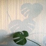 Monsterablatt und Schatten vor Raufasertapete